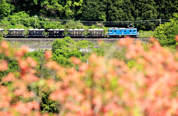 Photos: お花見電車~秩父鉄道バージョン~