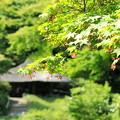 Photos: 緑の杜