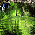 Photos: ス~イスイ~Into The Green~