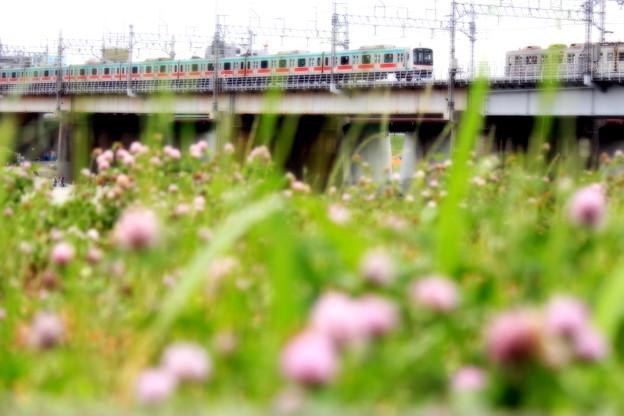 お花見電車~東急田都バージョン~
