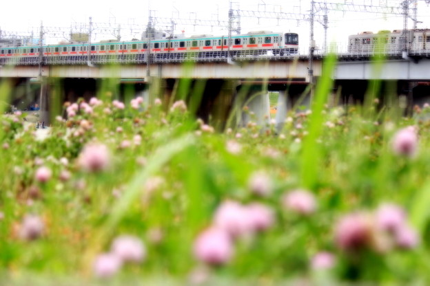 Photos: お花見電車~東急田都バージョン~