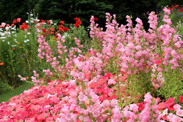 Sound Of Garden