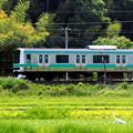 写真: 白鷺電車