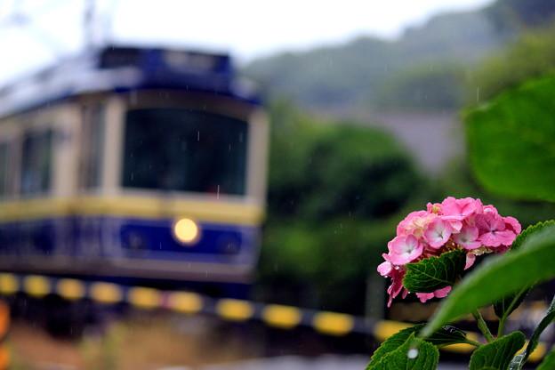 写真: 紫陽花電車~江ノ電バージョン~