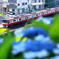 写真: 紫陽花電車~京急バージョン~