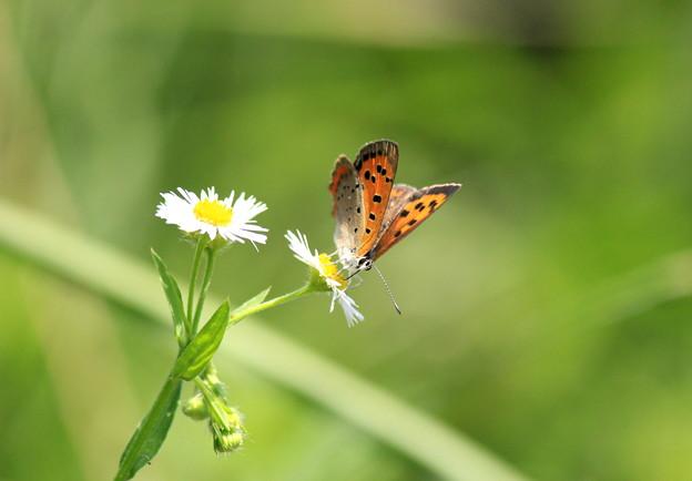 チュウチュウ蝶々~Unpredictable~