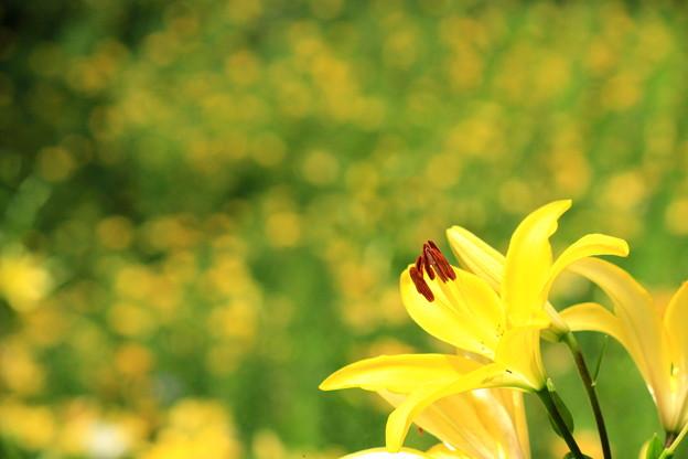 Yellow Rush