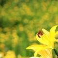Photos: Yellow Rush