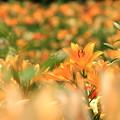 写真: Orange Rush