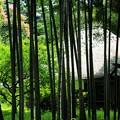 写真: 竹の中