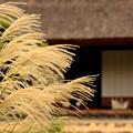 Photos: 秋近し