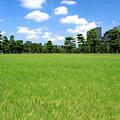 写真: Imperial Green