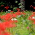 写真: 秋に…佇む
