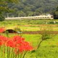 写真: 花咲く小田急