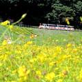 写真: お花見汽車ポッポ