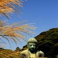 写真: 秋色Buddha