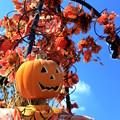 写真: Sunny Sunny Scarecrow