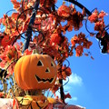 Sunny Sunny Scarecrow