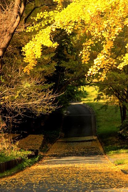 写真: 黄色い径