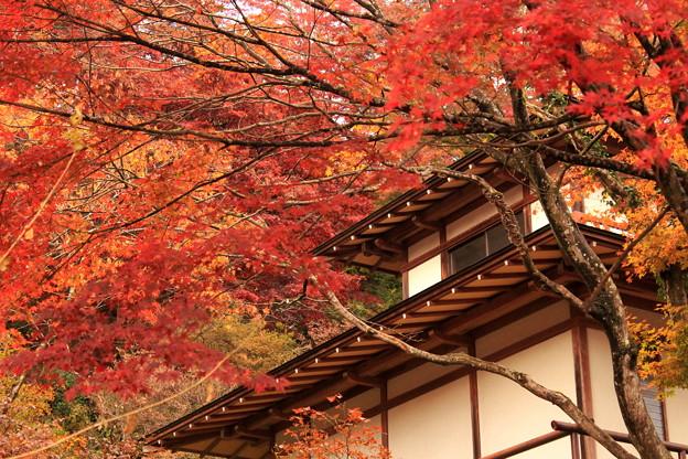 奥武蔵の秋