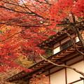 写真: 奥武蔵の秋