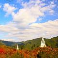 Photos: 飯能アルプスの秋