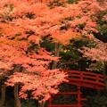 写真: 東京秋景~Red Side~