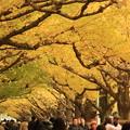 写真: 東京秋景~Yellow Side~