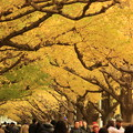 Photos: 東京秋景~Yellow Side~