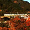 写真: 紅葉電車~奥多摩線バージョン~