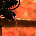 写真: 秋の水神