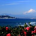 写真: 初冬の相州富士