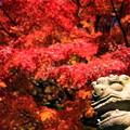 写真: 鎌倉秋景~Red Side~