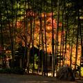写真: 竹林の彩