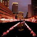 写真: 冬の夜桜