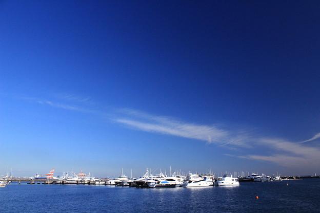 写真: マリーナの冬