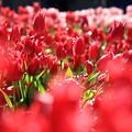 写真: 春が来たっ♪
