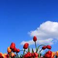 写真: Up To The Sky