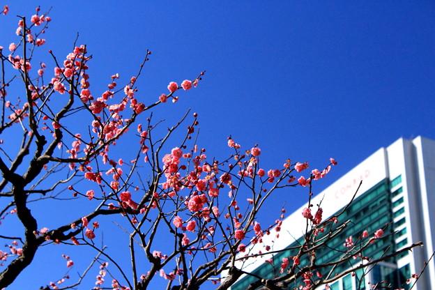 Photos: 都会の早春