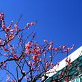 写真: 都会の早春
