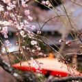 写真: 花雨