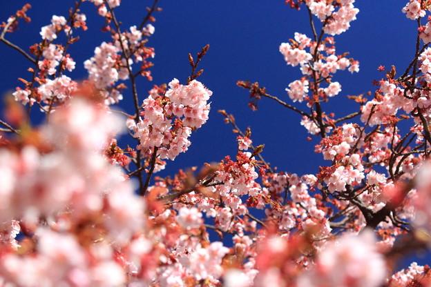 春が来たっo(^-^)o