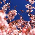 Photos: 春が来たっo(^-^)o