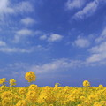 写真: 春色の丘