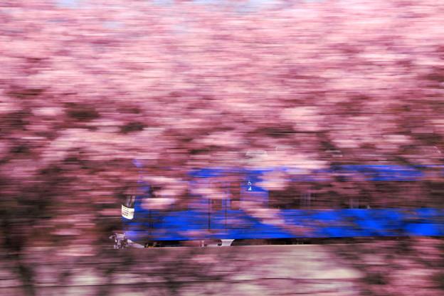 春をかける電車