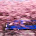 写真: 春をかける電車