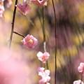 写真: Pink & Yellow