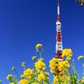 写真: 春色タワー