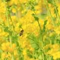 写真: Hello Spring