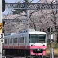 Photos: ピンク&Pink